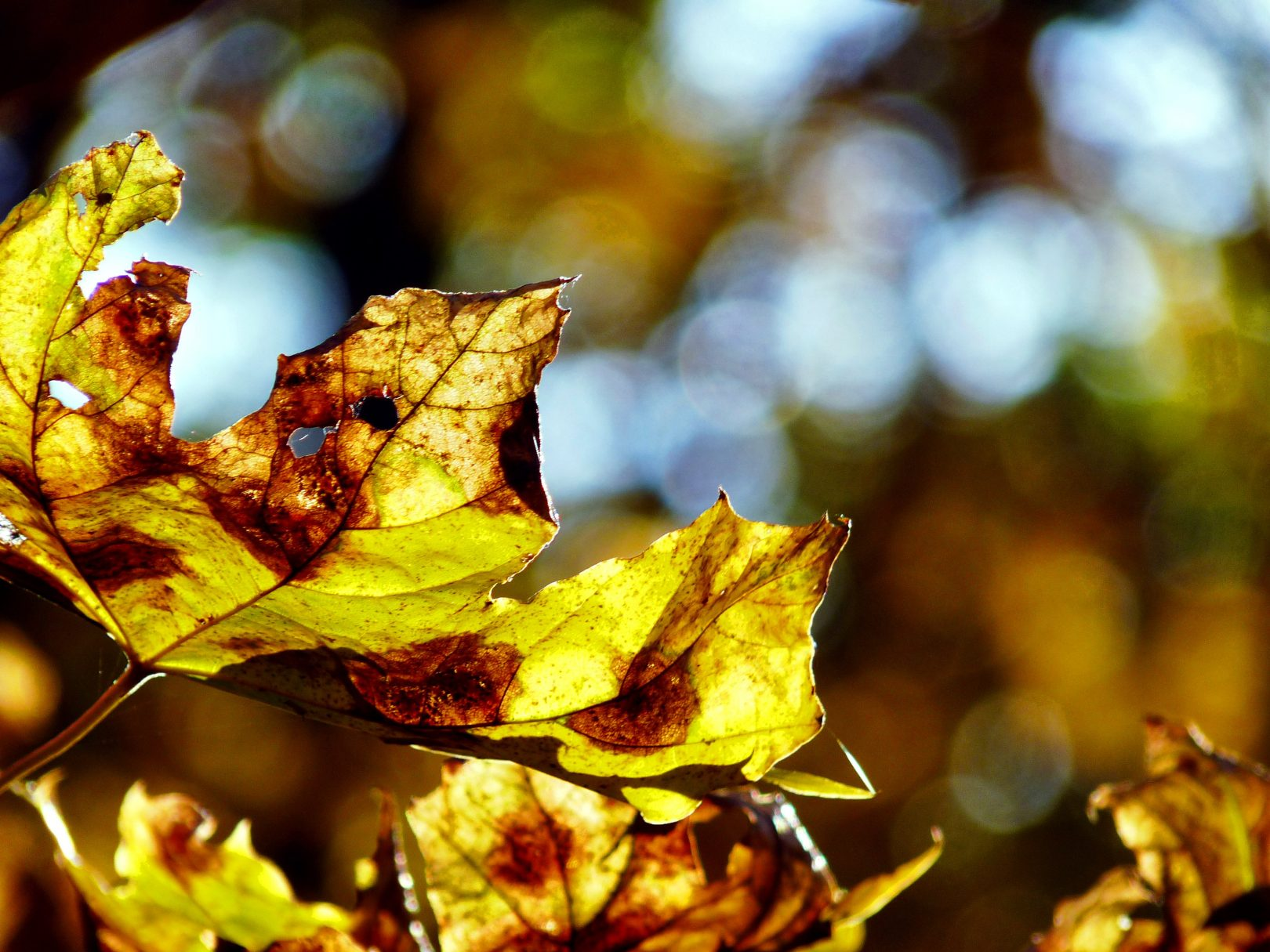 Les travaux d'arboriculture l'automne